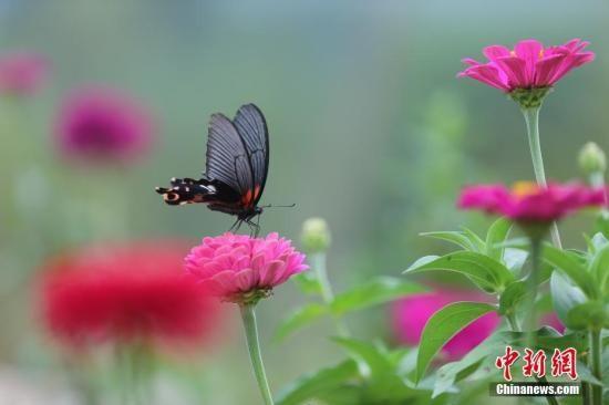 优秀手绘思维导图蝴蝶