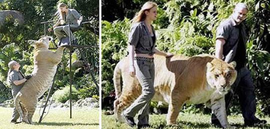 世界上最大的猫科动物