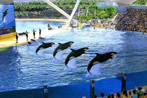 2.海洋主题公园