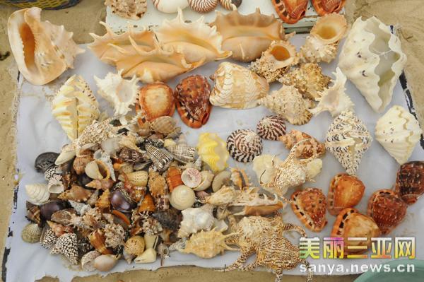 海南三亚大海风情之——斑斓海螺