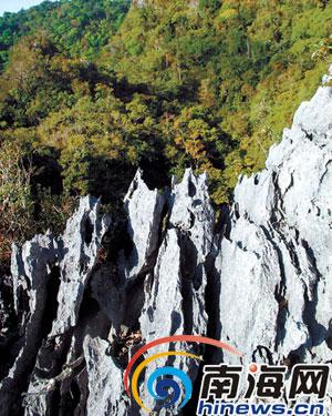 海南石林风景区