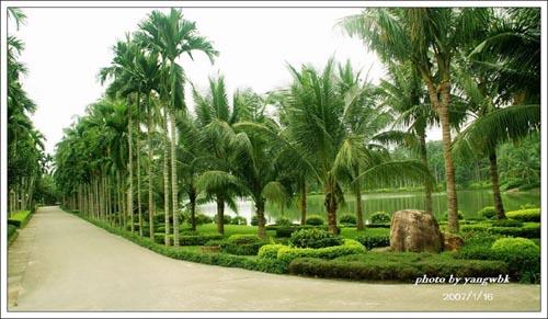 属典型热带季风气候,自然植被发育良好,依山傍水,风景秀丽,葱葱绿海