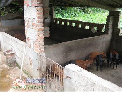 小型养猪场