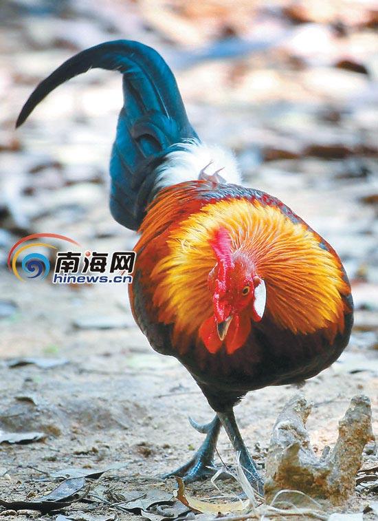 大田保护区成野生动物天堂