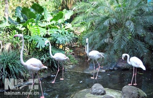 海南热带野生动植物园:有趣的动物百态