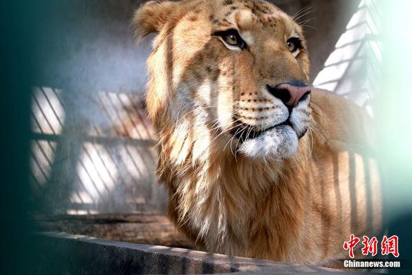 10月27日(周三)江西九江甘棠公园动物园工作人员正隔着铁栏杆在给