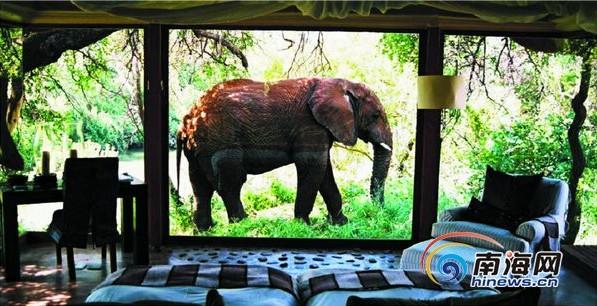 野生动物主题酒店