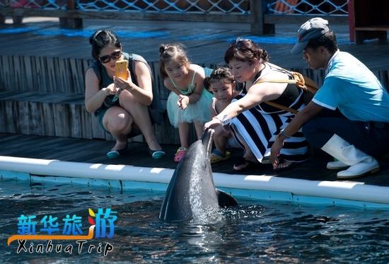 海南分界洲岛海洋文化馆的海豚在与游客互动.图片由景区提供