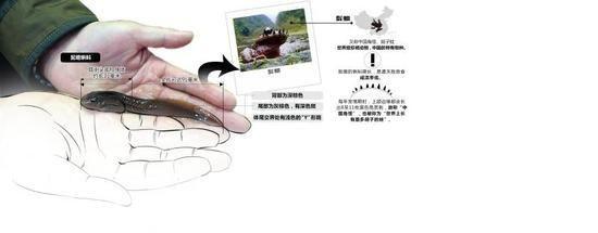 牛蛙的内部结构图生物绘图