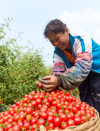 定安农业转型升级促农民增收 增强百姓获得感