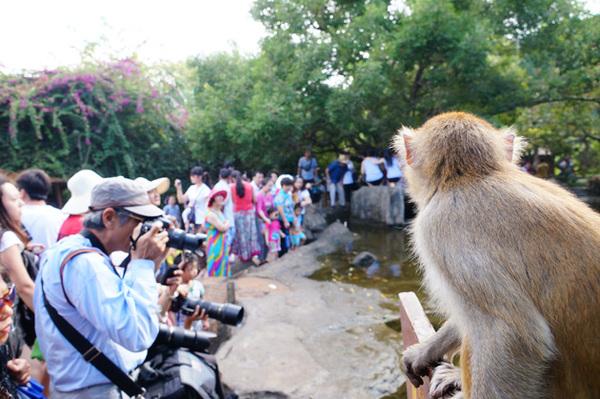 游客畅游南湾猴岛