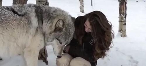 实拍:美国女孩与森林狼贴身抚摸亲吻