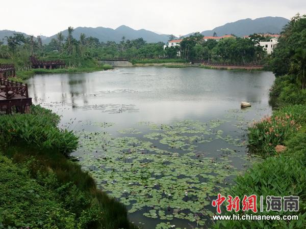 中廖村这个纯黎族村庄,民风淳朴,风景秀丽,生态环境几乎未遭到破坏