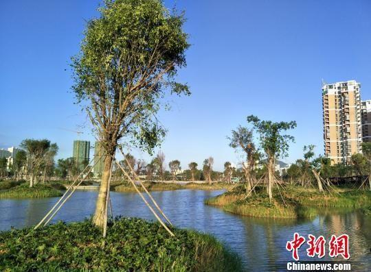 """三亚市红树林保护站站长林贵生介绍,东岸湿地公园项目是三亚""""双修"""""""