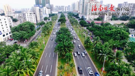 海口补种3600多株椰子树恢复椰城名片
