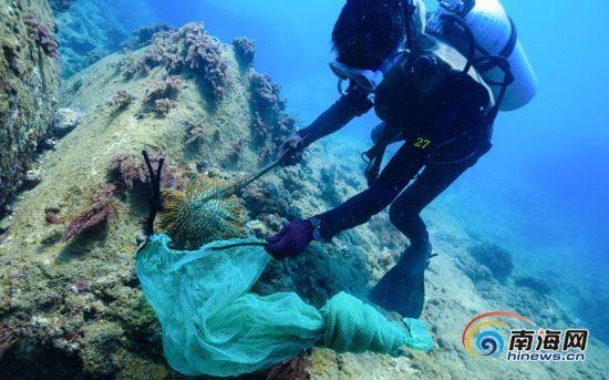 """为保护珊瑚 潜水员在陵水分界洲岛旅游区海底深处拔"""""""