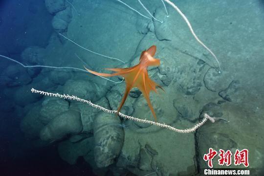 南海鱼类图片大全