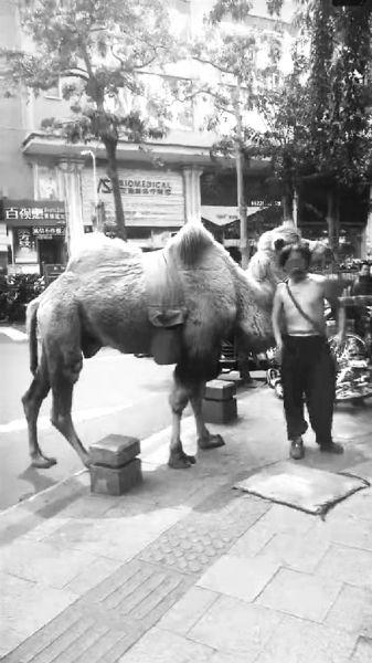 5日下午5点半,海南省小动物保护协会秘书长王冰接到来自12345政府