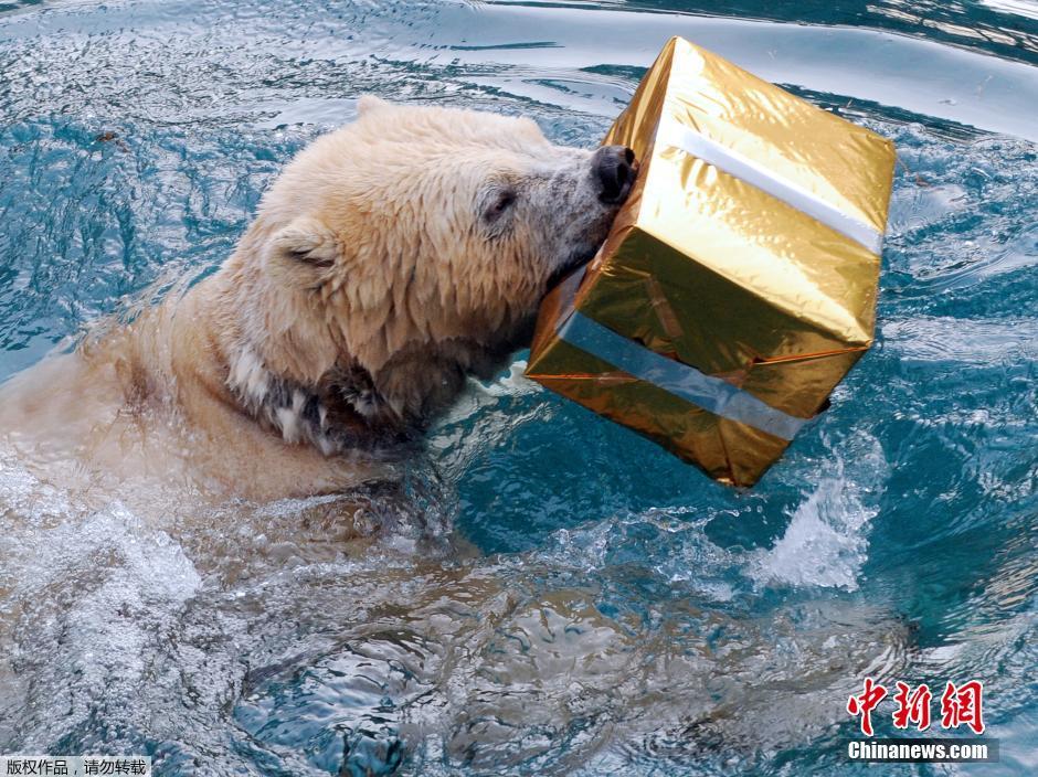 法国动物园为动物发圣诞礼物(2)