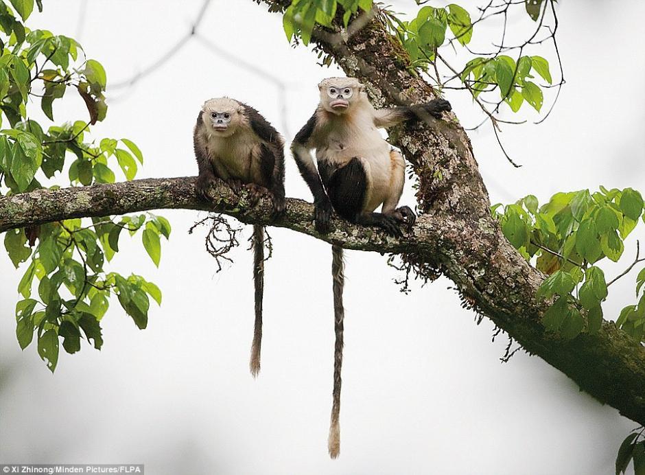 最奇异的灭绝动物世界上最早灭绝的动物