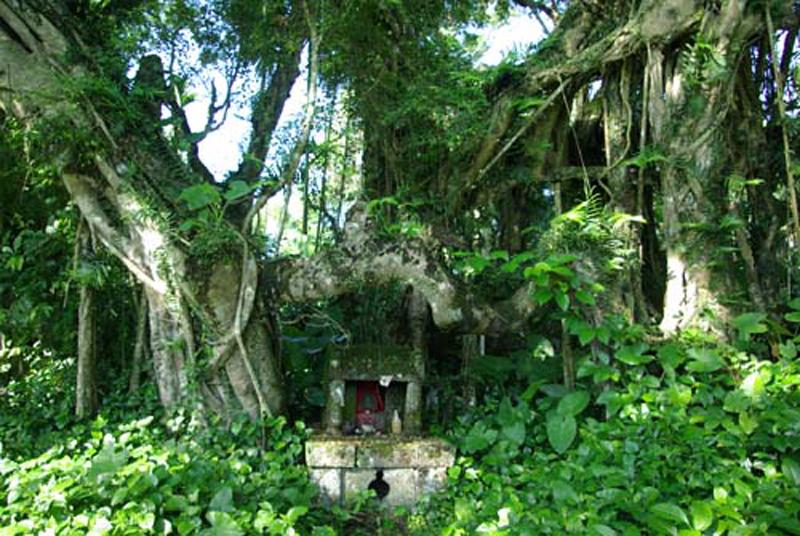 壁纸 风景 森林 树 桌面 800_536