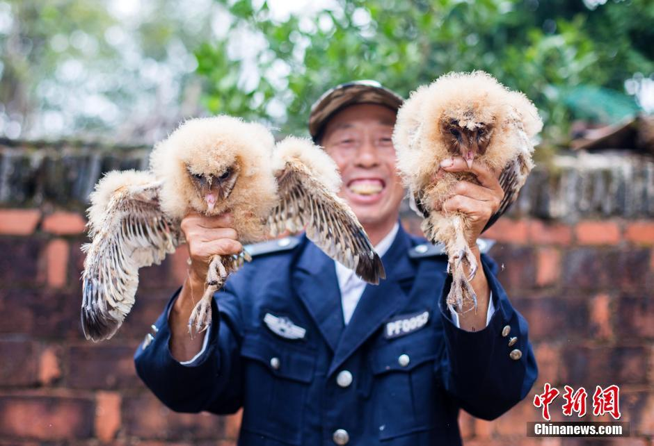 村民捡到五只猴面鹰 系国家二级保护动物(4)