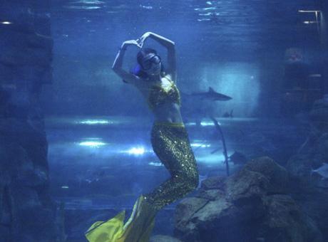 壁纸 海底 海底世界 海洋馆 水族馆 460_340