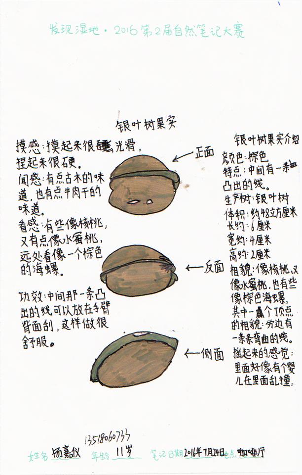 杨嘉仪:银叶树果实
