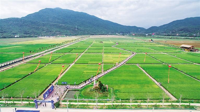俯瞰三亚海棠湾水稻国家公园
