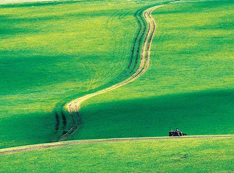 美丽的草原我的家