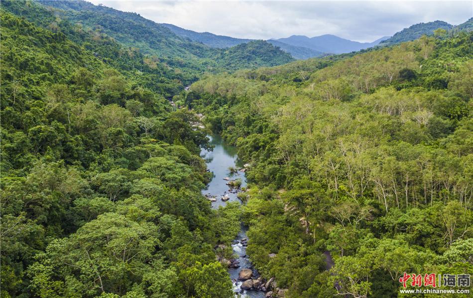 航拍海南保亭呀诺达热带雨林(组图)(2)