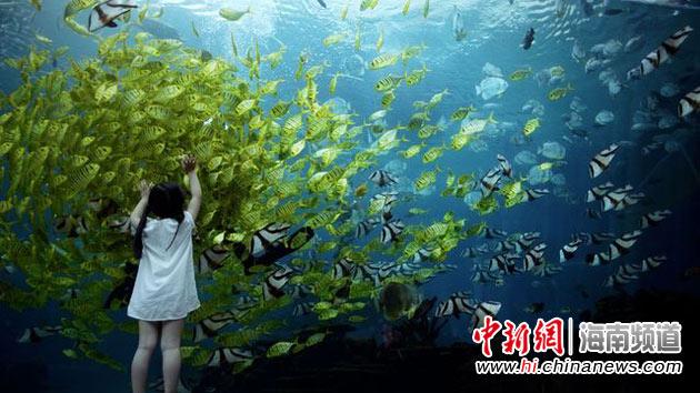 届时将开展参观海洋馆和逗趣鱼儿亲密接触