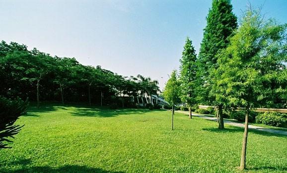 环形绿地景观设计