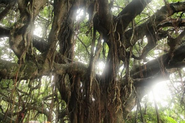 章塘驿站三者联合起来,共同打造榕树氧吧乡村主题公园.