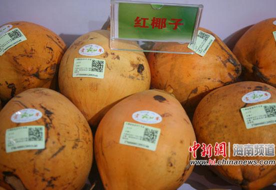 海南红椰子