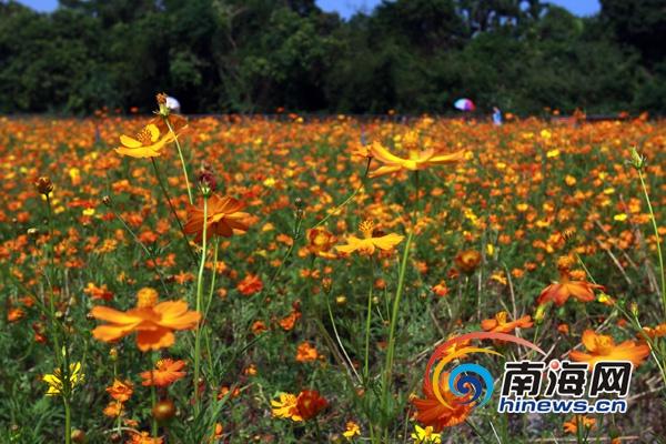 万宁国庆推自驾游乡村游 当地人享受景区优惠