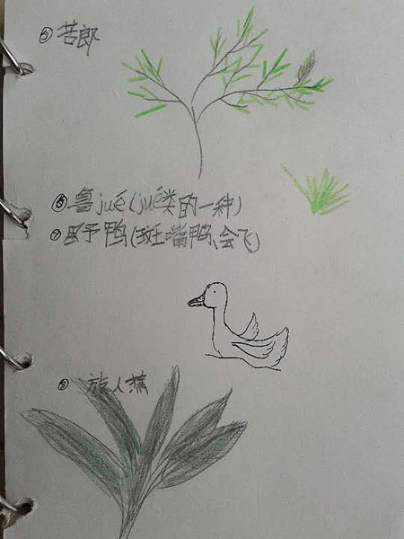 自然笔记画花简单美丽清新可爱