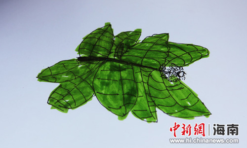 琼中鸭坡自然笔记现场作品