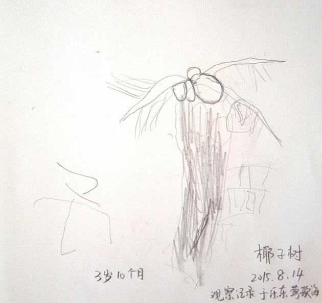 小予:椰子树