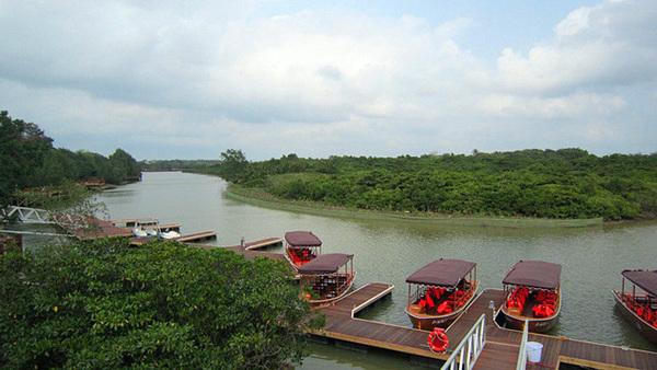 东寨港红树林(5)