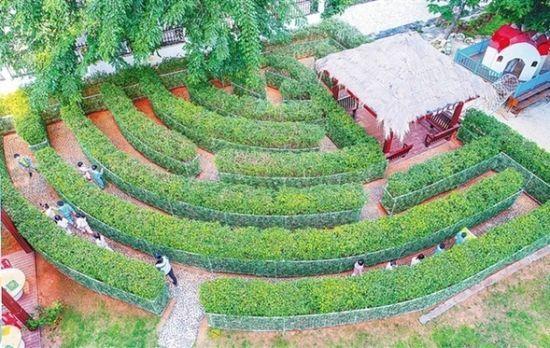 """近日,在省军区幼儿园,孩子们在户外植物迷宫玩""""寻宝""""游戏."""